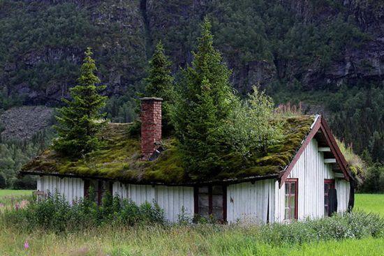Acoperișurile verzi din Norvegia